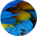Blue-Feathers